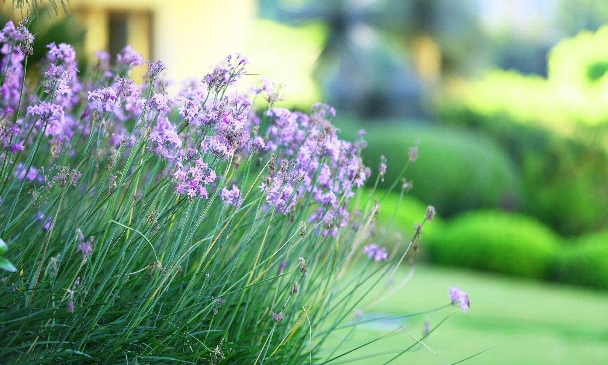 Natural Gardening Works